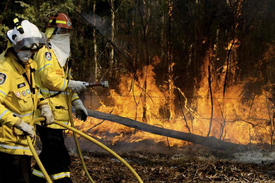 An Australiens Ostküste brennt es weiter. Vier Menschen wurden bereits getötet.