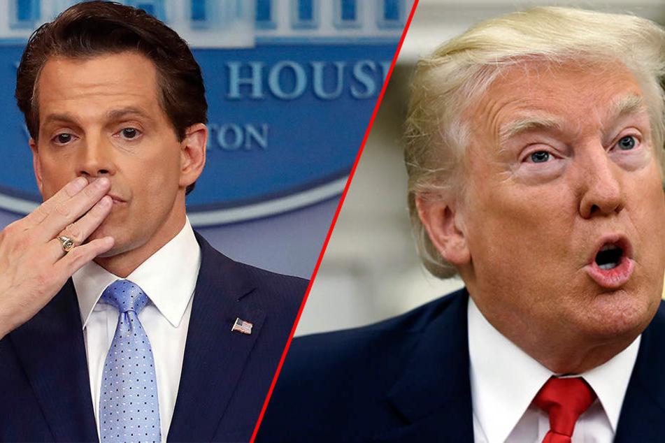 Anthony Scaramucci (53) war nur 10 Tage als Kommunikationschef von Donald Trump (71, rechts) im Amt.