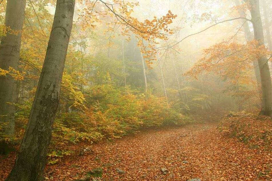 Wanderer fanden in einem Wald bei Moskau das an einen Baum gefesselte Skelett (Symbolbild).