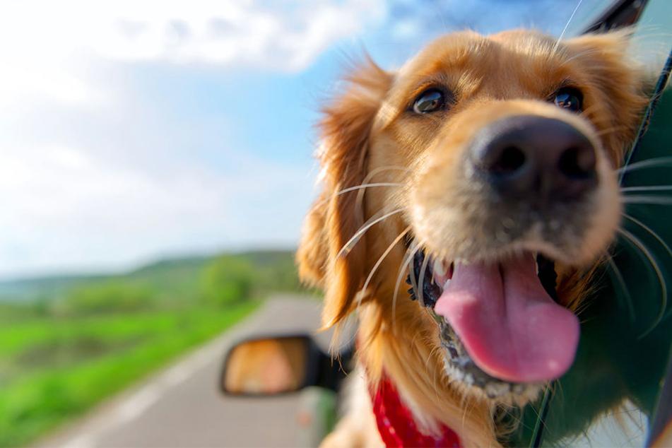In Verl müssen Hundebesitzer jährlich 24,60 Euro zahlen.