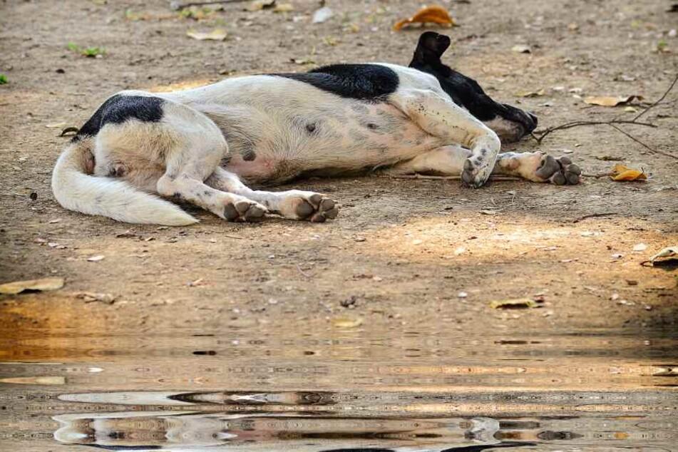Einen toten Hund barg die Feuerwehr aus einem Teich in Bielefeld. (Symbolbild)