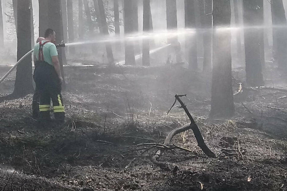 Feuerwehrleute löschen einen Waldbrand in einem Waldstück zwischen Kremmen und Nauen.