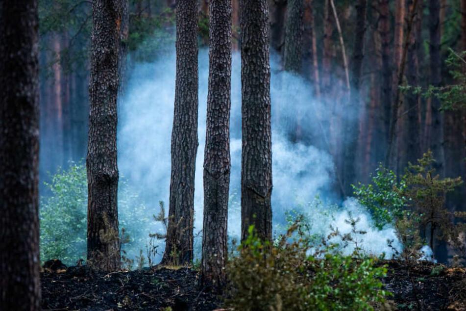 Das Feuer breitete sich auf rund 6000 Hektar aus.