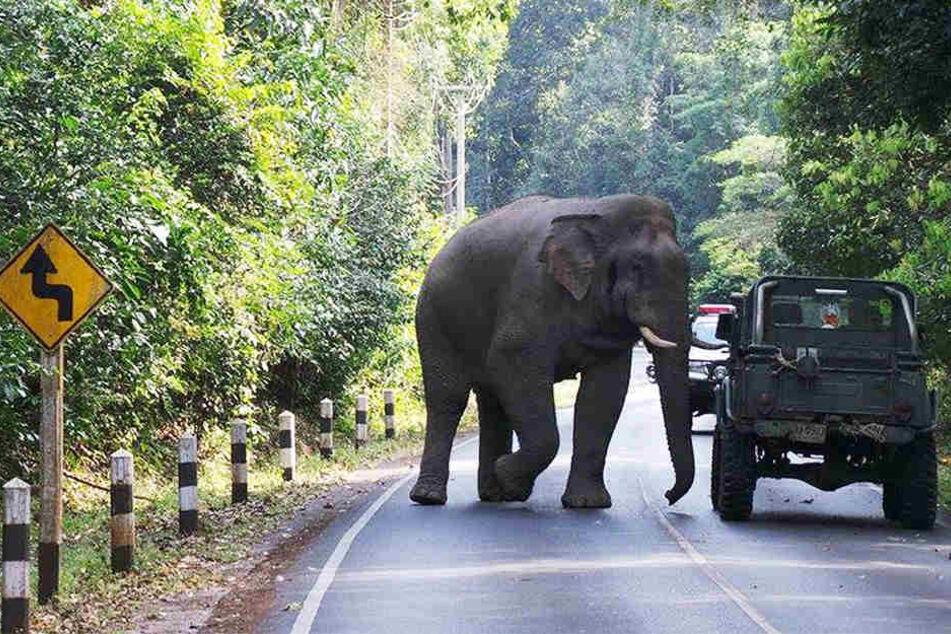 In Thailand werden Tausende Elefanten zur Touristenbespaßung missbraucht - mit Folgen.