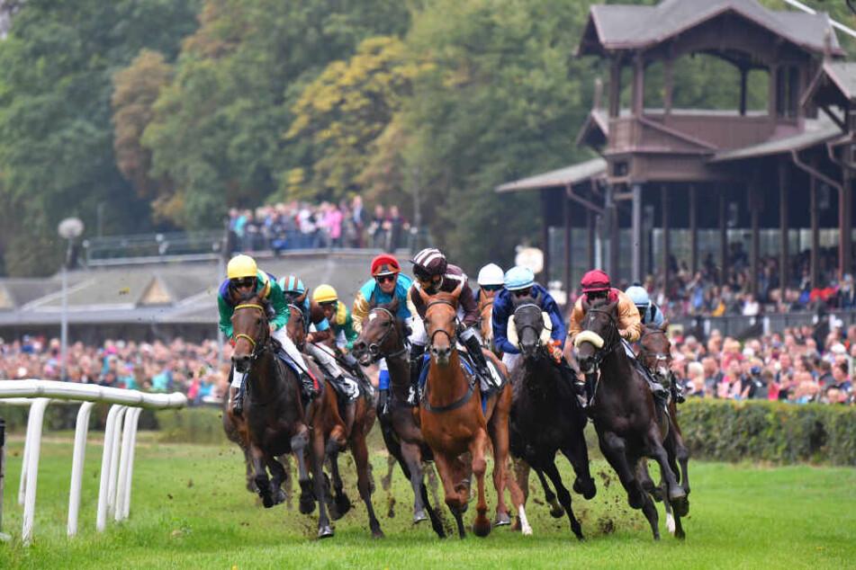 Schnelle Pferde, Wetten, schicke Hüte - auf der Galopprennbahn Seidnitz werden 2020 acht Renntage ausgetragen.