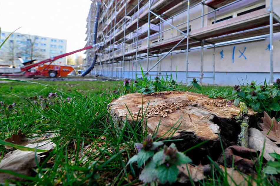 Chemnitz: Schon wieder gesunde Bäume gefällt!