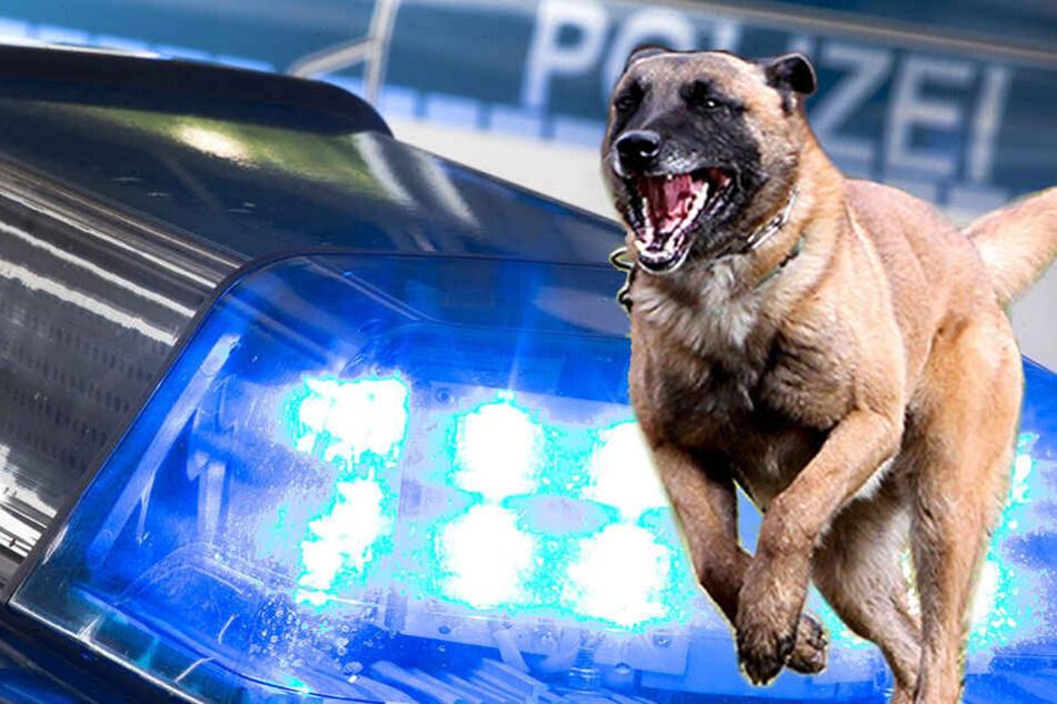 Der Wachhund wehrte weitere Angriffe der bewaffneten Männer ab.