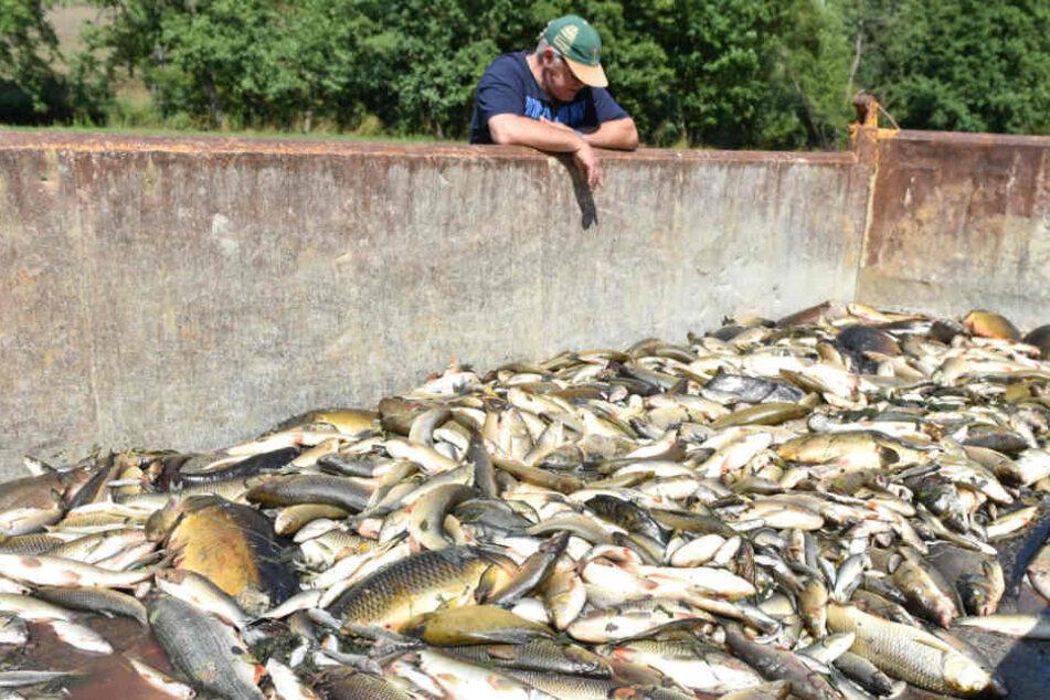 Giftiges Löschwasser hatte das große Fischsterben in der Jagst ausgelöst. (Archiv)
