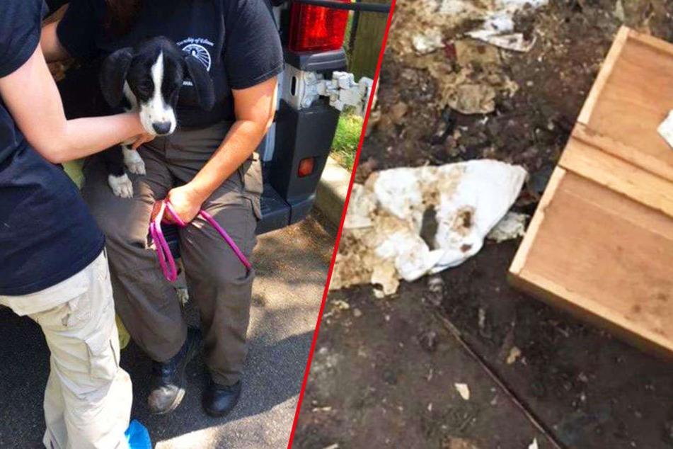 Über 40 Hunde unter elenden Bedingungen gehalten