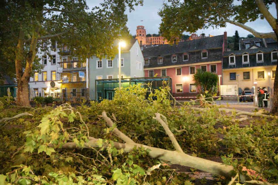 In Eppelheim (Baden-Württemberg) stürzten ganze Bäume um.