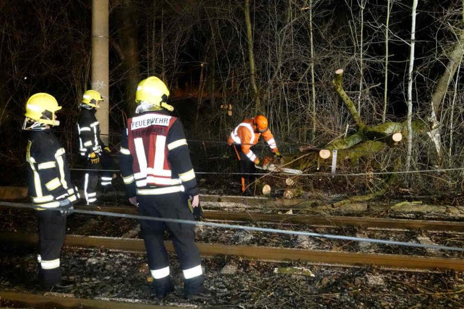 Die Feuerwehr beseitigte die Bäume und beräumte die Gleise.
