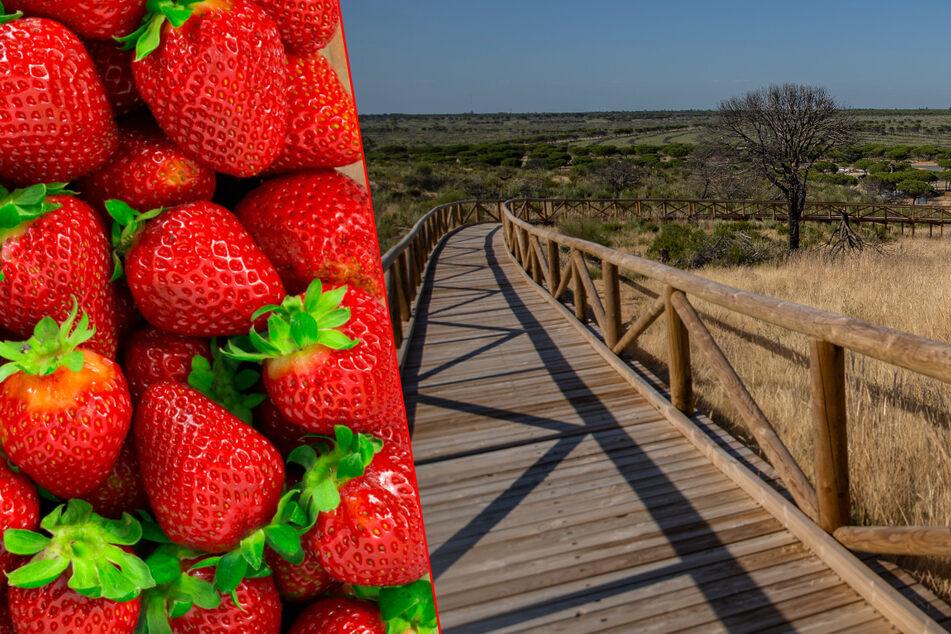 Erdbeeren und Urlauber machen dieses Naturparadies kaputt