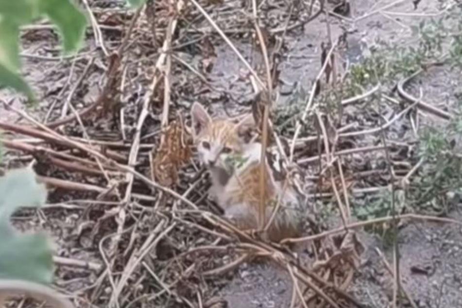 Voller Angst kauerte die Baby-Katze in dem Hinterhof.