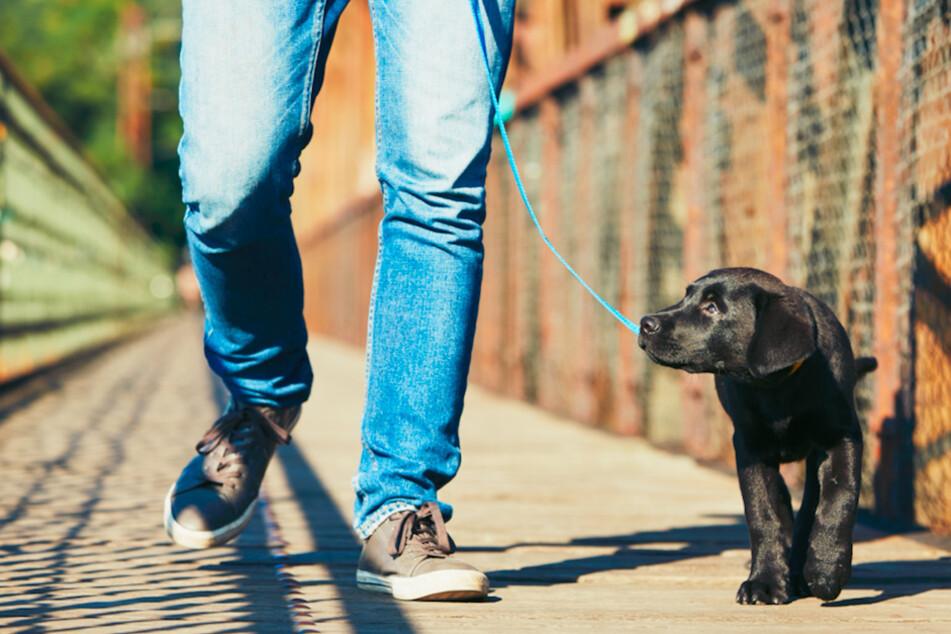 Hunde an der Leine führen: Das ist der größte Fehler, den Du machen kannst