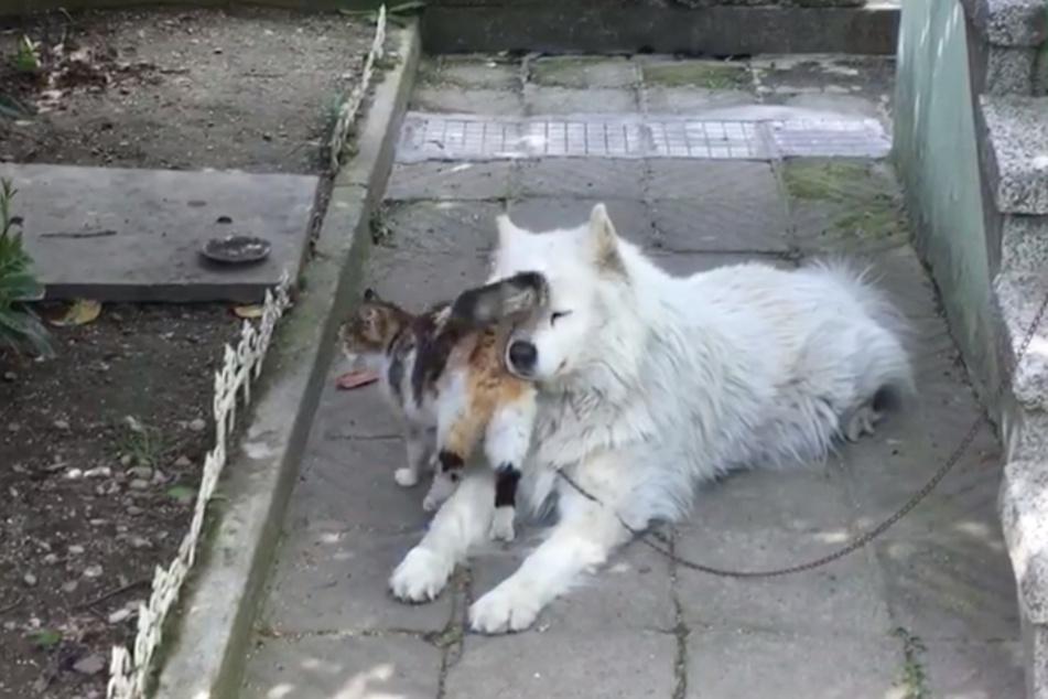 Zunächst schlängelt sich die Katze ganz nah an dem Hund vorbei.