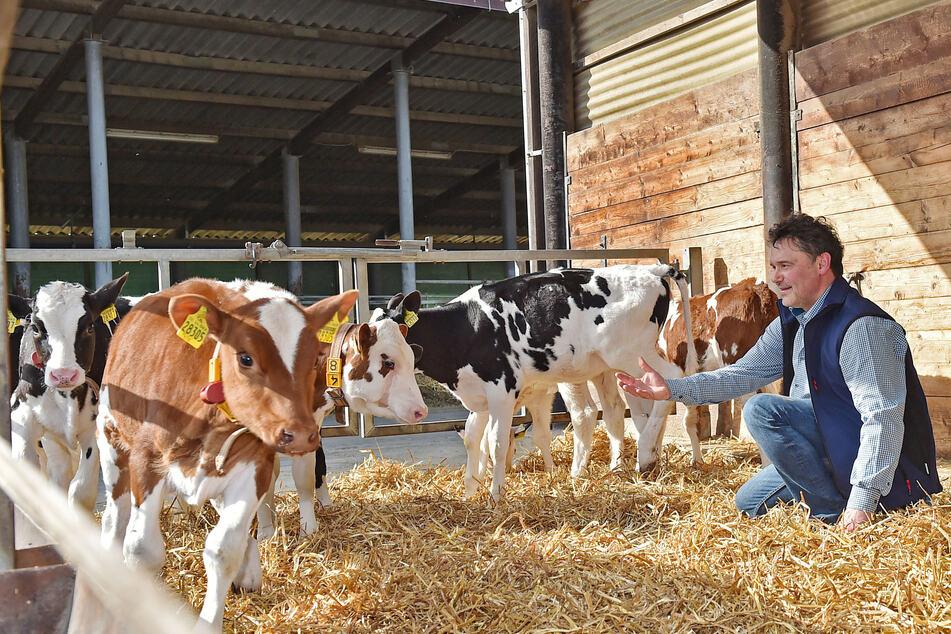 Milchbauer Tobias Kockert (270) und seine Mannschaft haben 270 Kühe.