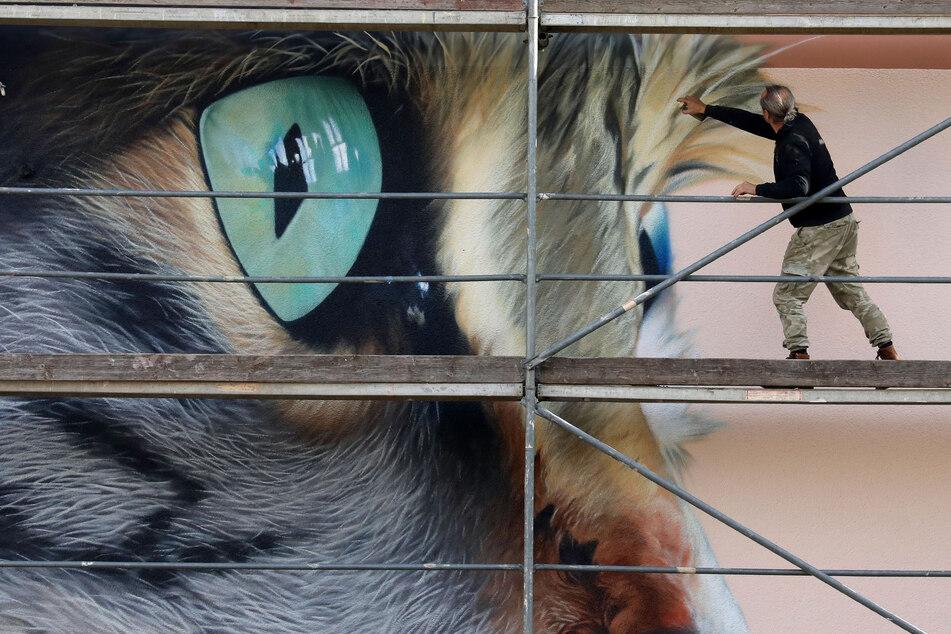 Künstler Tasso bei der Arbeit: In Waldenburg sprayt er eine riesengroße Katze an eine Hauswand.