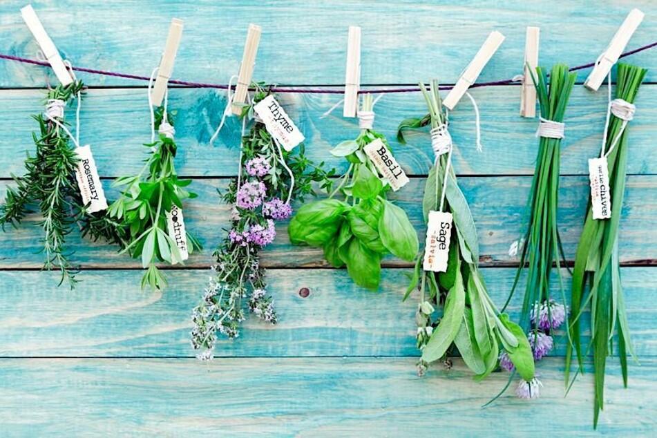 Diese Kräuter sind nicht giftig, wenn sie Blüten ausbilden.