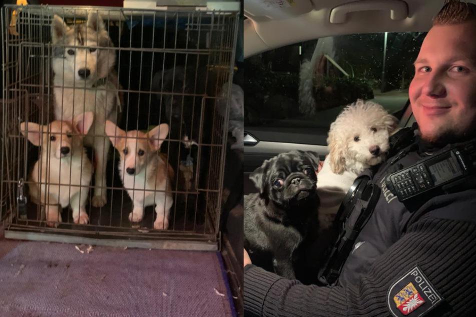Anwohner werden zu Tierrettern: Hunde-Welpen vor Verkauf aus Auto gerettet!