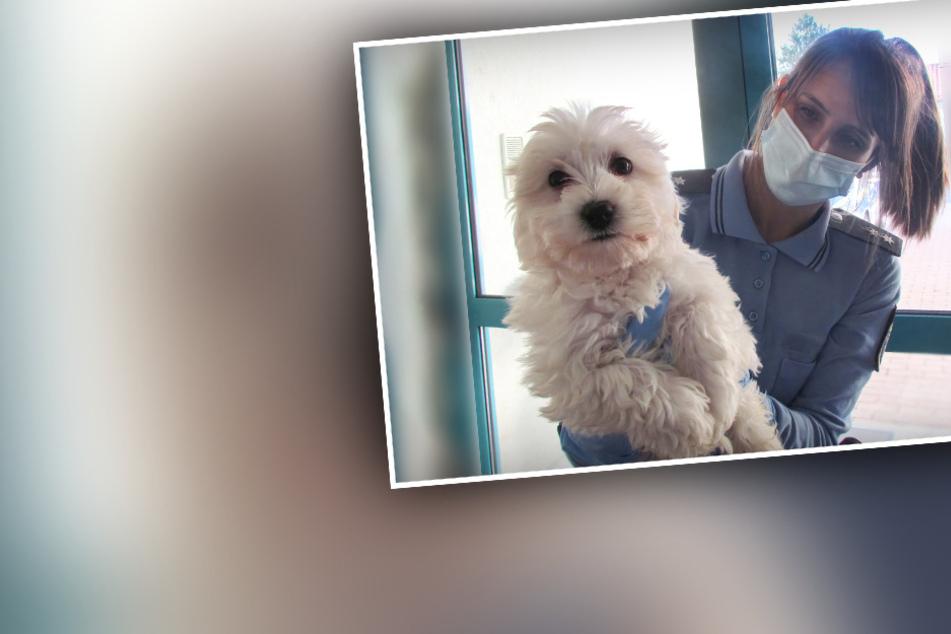 Hundewelpen verwahrlosen in versifften Transportboxen: Reaktion des Besitzers ist verstörend