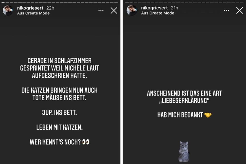 Niko Griesert (30) berichtete seinen Instagram-Fans von einem unschönen Erlebnis: Im Bett seiner Freundin Michèle de Roos (27) hatten deren Katzen eine besondere Überraschung hinterlegt.