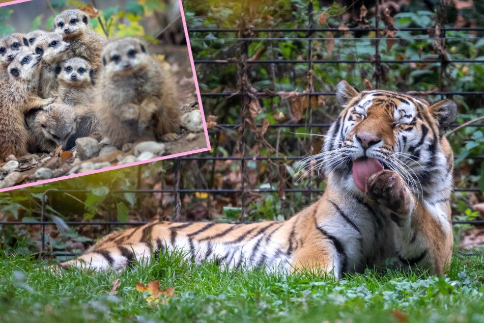 Chemnitz: Was treiben Tierpark-Tiere so im Lockdown?