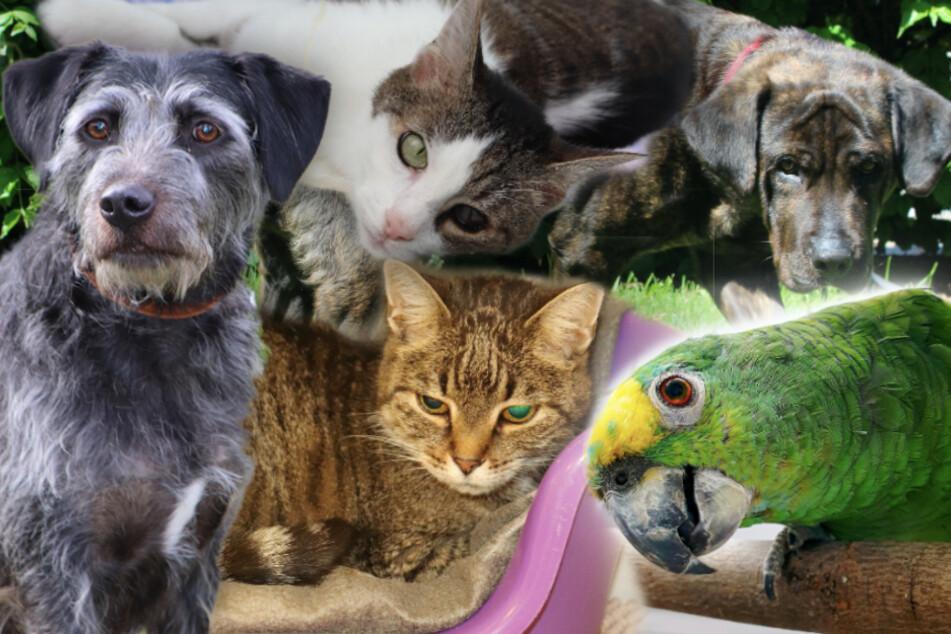 5 besondere Tiere: Diese Hunde, Katzen und ein Papagei suchen endlich ein Zuhause