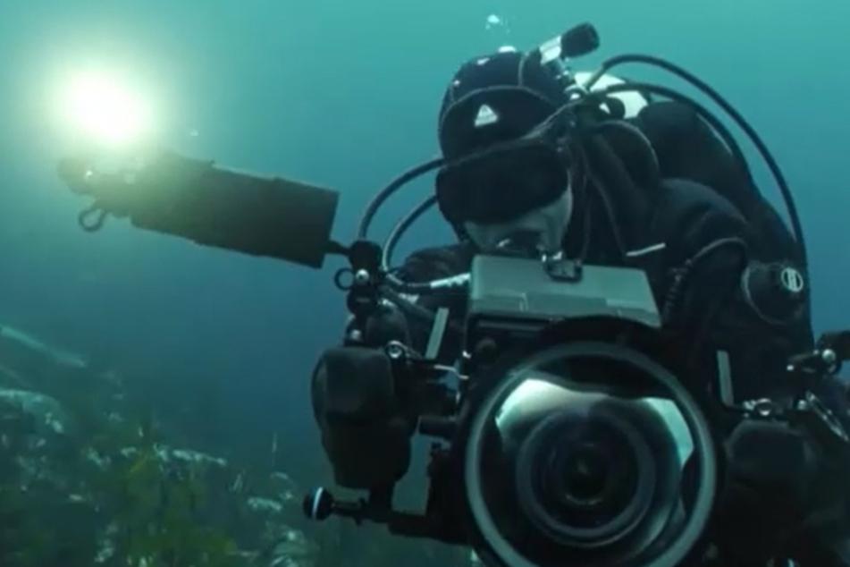 Christina Karliczek filmt Haie mit giftigen Stacheln und begegnet den legendären Riesenhaien in MINUS zwei Grad kaltem Wasser vor Grönland.