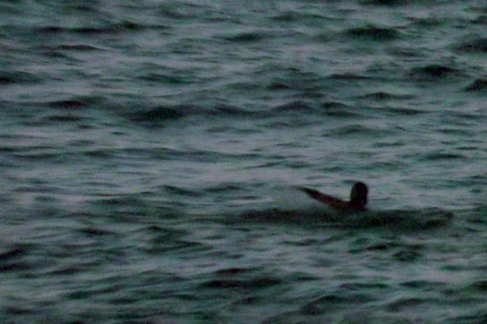 Leon schwamm zum Kutter, wurde aber von der Produktion zurückgeholt.