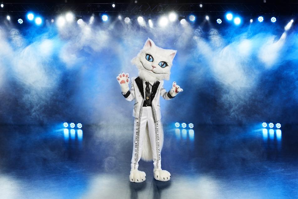 Diese Katze sieht schlank aus. Steckt etwa Lena Meyer-Landrut in dem Kostüm?
