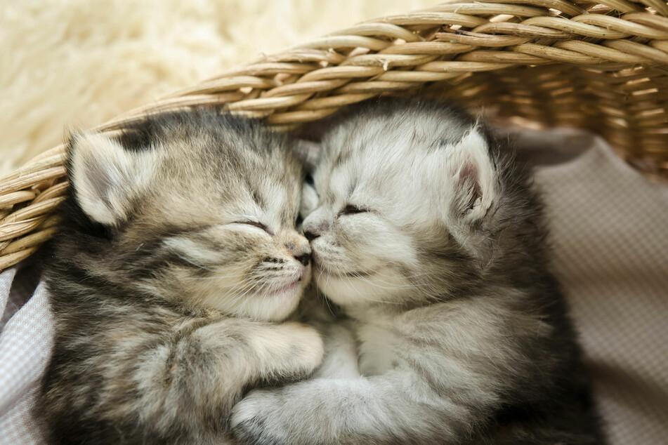 Babykatzen in den Katzen News