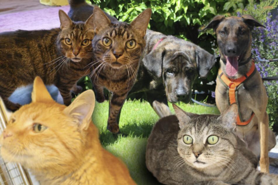 6 besondere Hunde und Katzen: Diese Tiere wünschen sich ein neues Zuhause