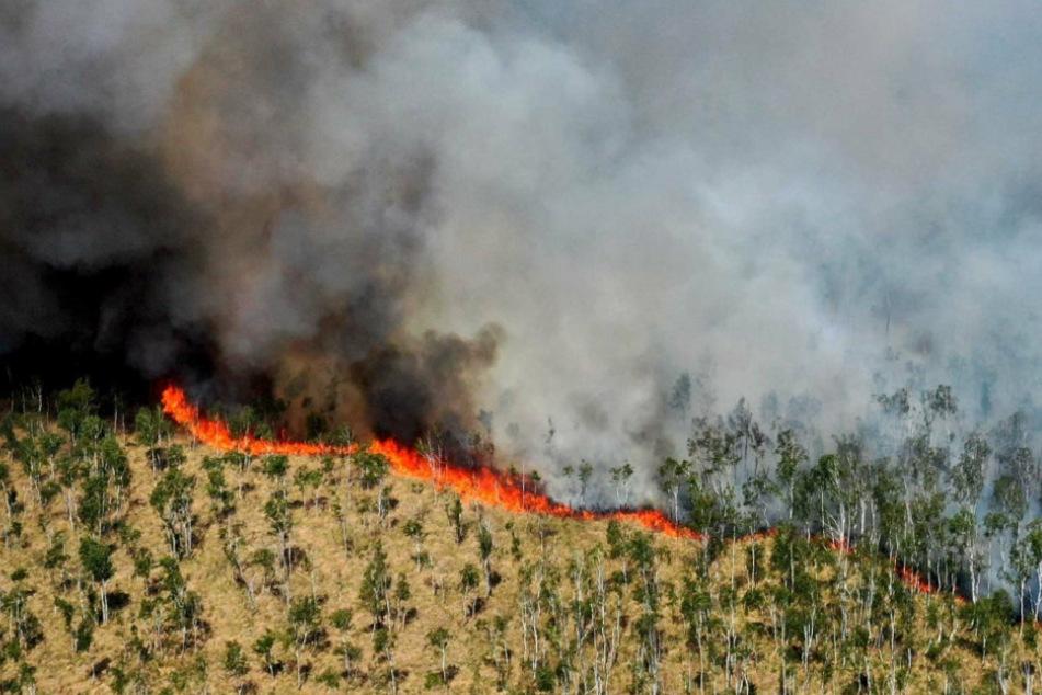 Blick auf eine Rauchwolke während eines Waldbrandes im Loben-Moor zwischen Gorden-Staupitz, Hohenleipisch und Plessa.