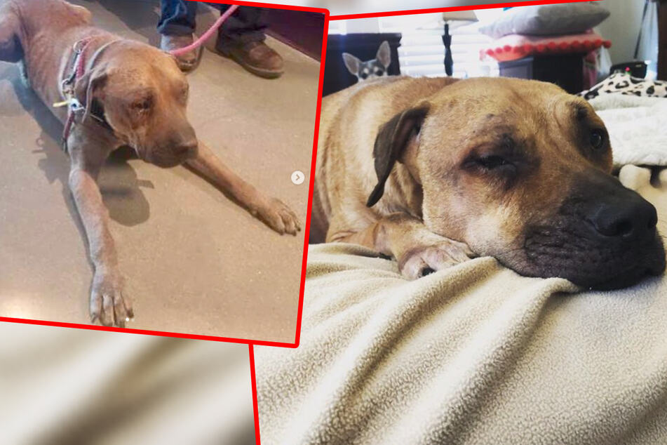 Traumatized dog struggles with his new home until he meets a feline friend
