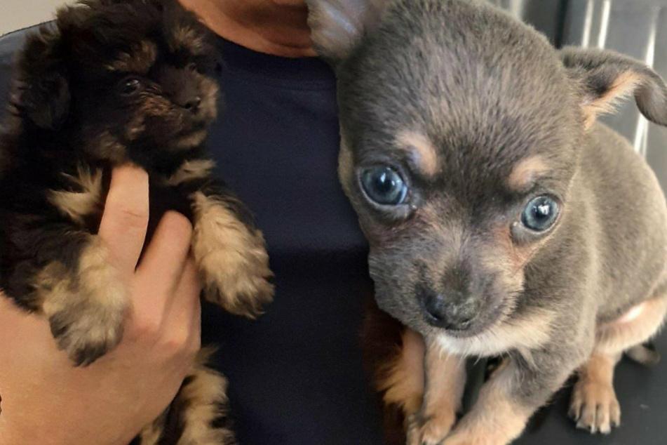 Auf der A17-Schmuggler-Route: Polizei rettet süße Hundewelpen!