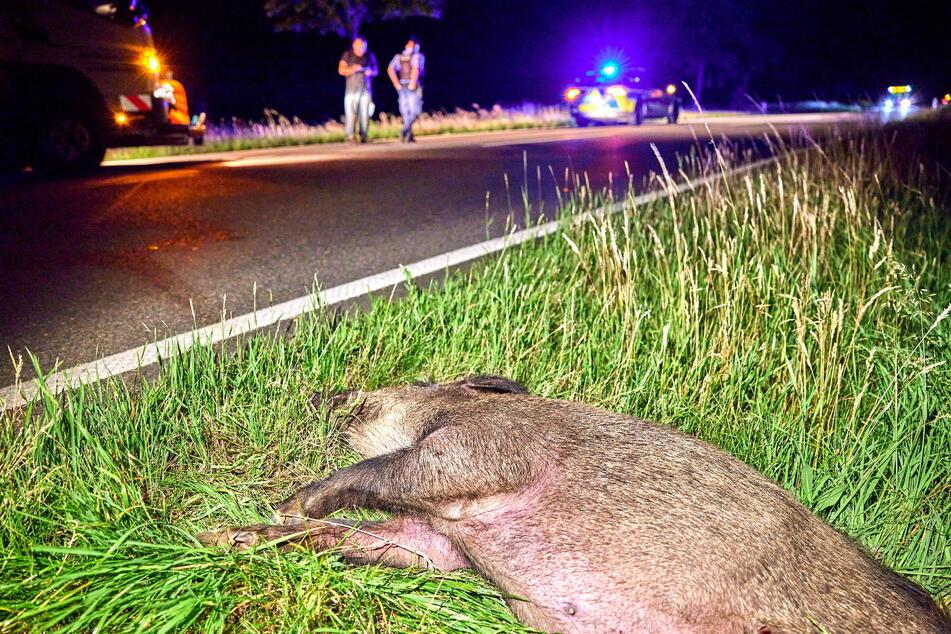 Wildunfall in Sachsen: Das Wildschwein starb, eine Motorradfahrerin (18) wurde verletzt.