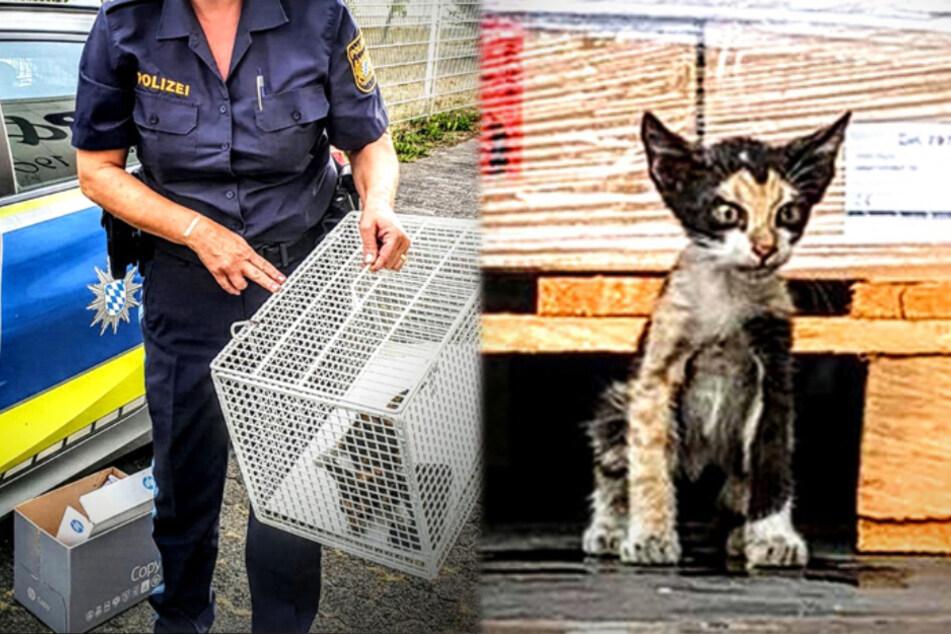Die Montage zeigt rechts die Katze in dem Lkw-Anhänger und links die Mieze in einer Transportbox.
