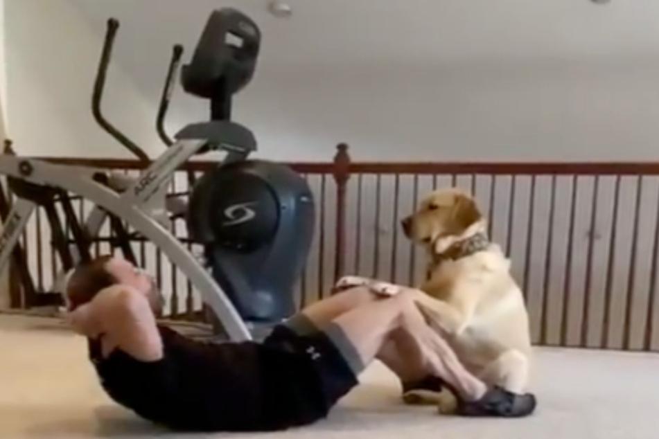 Dieser Hund ist Personalcoach und bester Freund in Personalunion.