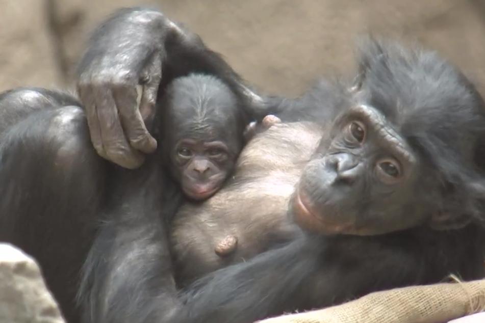 Und noch eine Mama: Auch Luisa kümmert sich bereits ganz liebevoll um ihr kleines Töchterchen.