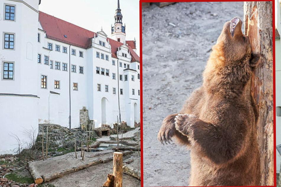 Ab ins neue Spieleparadies: In Torgau sind die Bären wieder los!