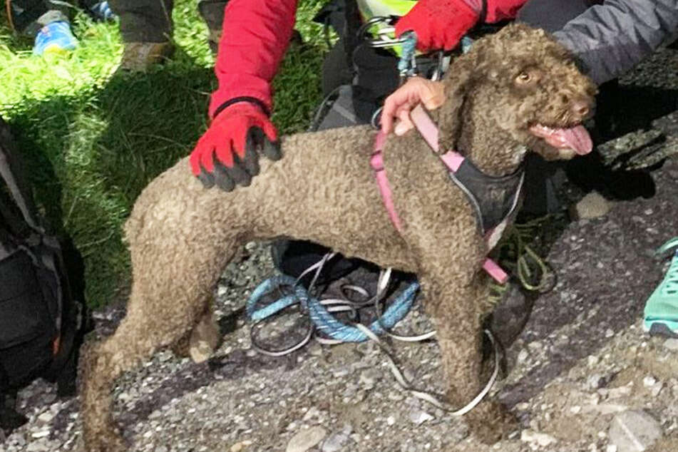 Austrian authorities launch massive search effort after dog gets lost in the mountains