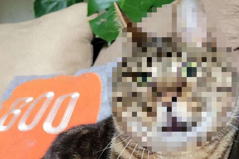 Frau verliebt sich sofort in diese Katze, weil sie so extrem ungewöhnlich aussieht