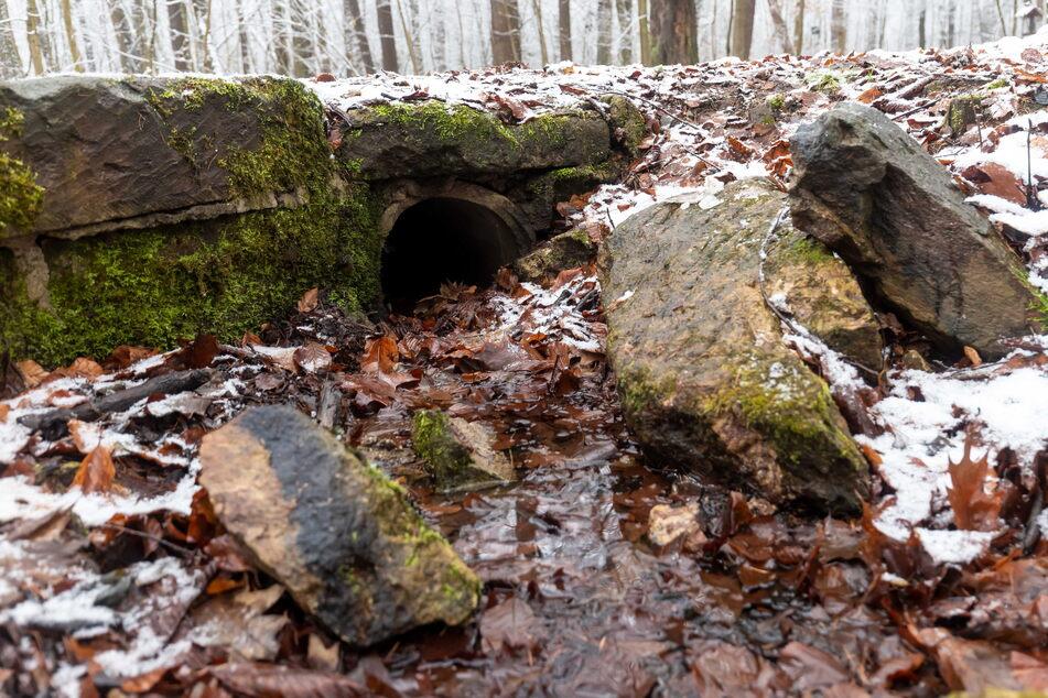 Der Zulauf zum Blaubornteich im Zeisigwald ist kaputt.