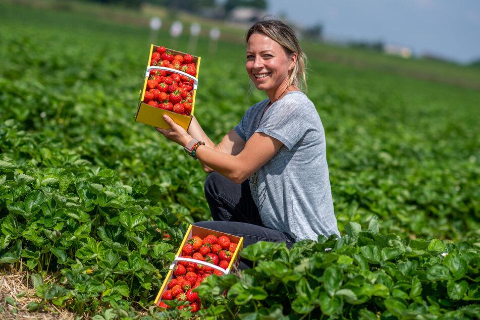 Bianca Scholz (35) vom Fruchthof Hammer freut sich über Erdbeeren wie aus dem Bilderbuch.
