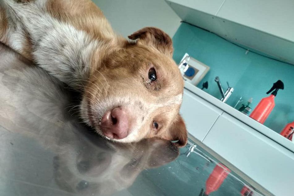 Der gerettete Hund wurde sofort in eine Tierklinik gebracht. Dort ist er weiterhin in professioneller Obhut.