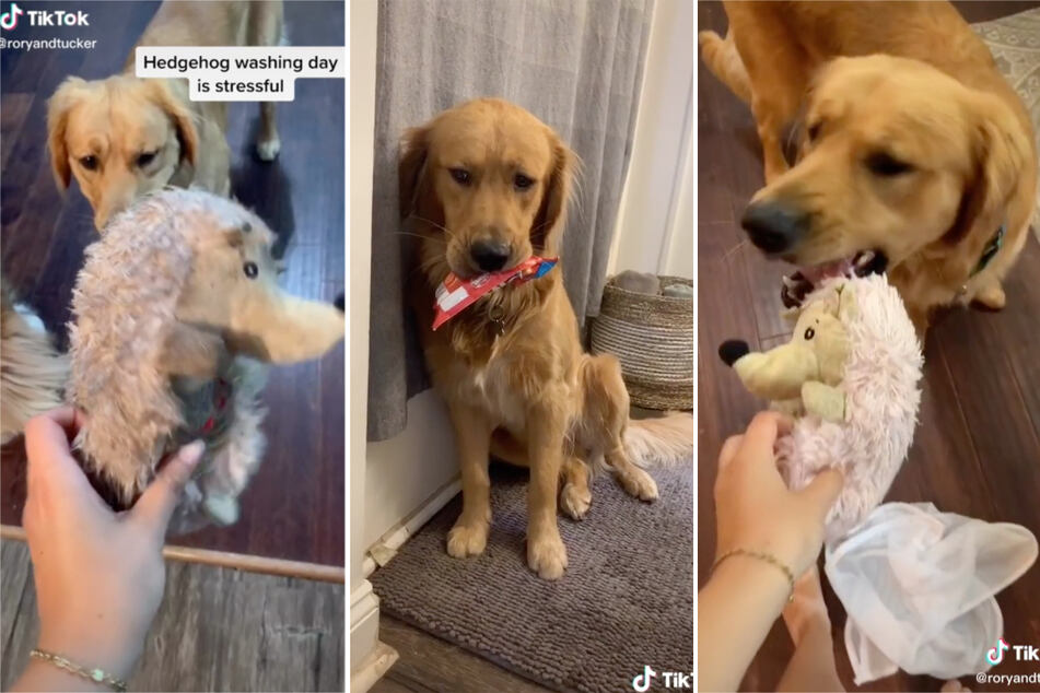 The temporary pain was worth it – Tucker's toy is now squeaky clean and ready to play again.