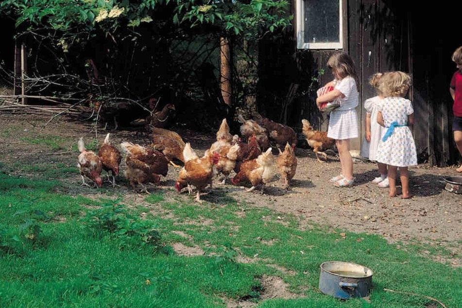 Mutter lässt ihre Kinder auf Bauernhof zurück. Dann passiert dieses Wunder