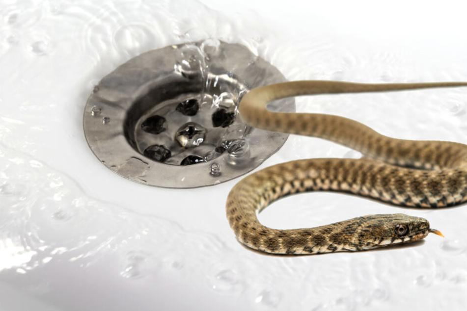 Ungebetener Besuch beim Duschen: Feuerwehr muss Schlange entfernen!