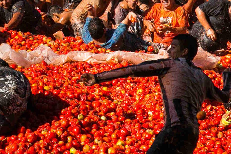Chilenischer Tomatenkrieg ausgebrochen!