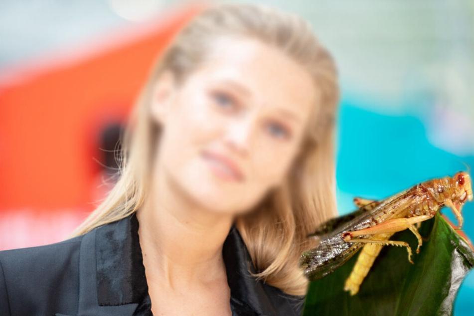 Dschungel-Prüfung bestanden! Dieses Topmodel steht auf Insekten